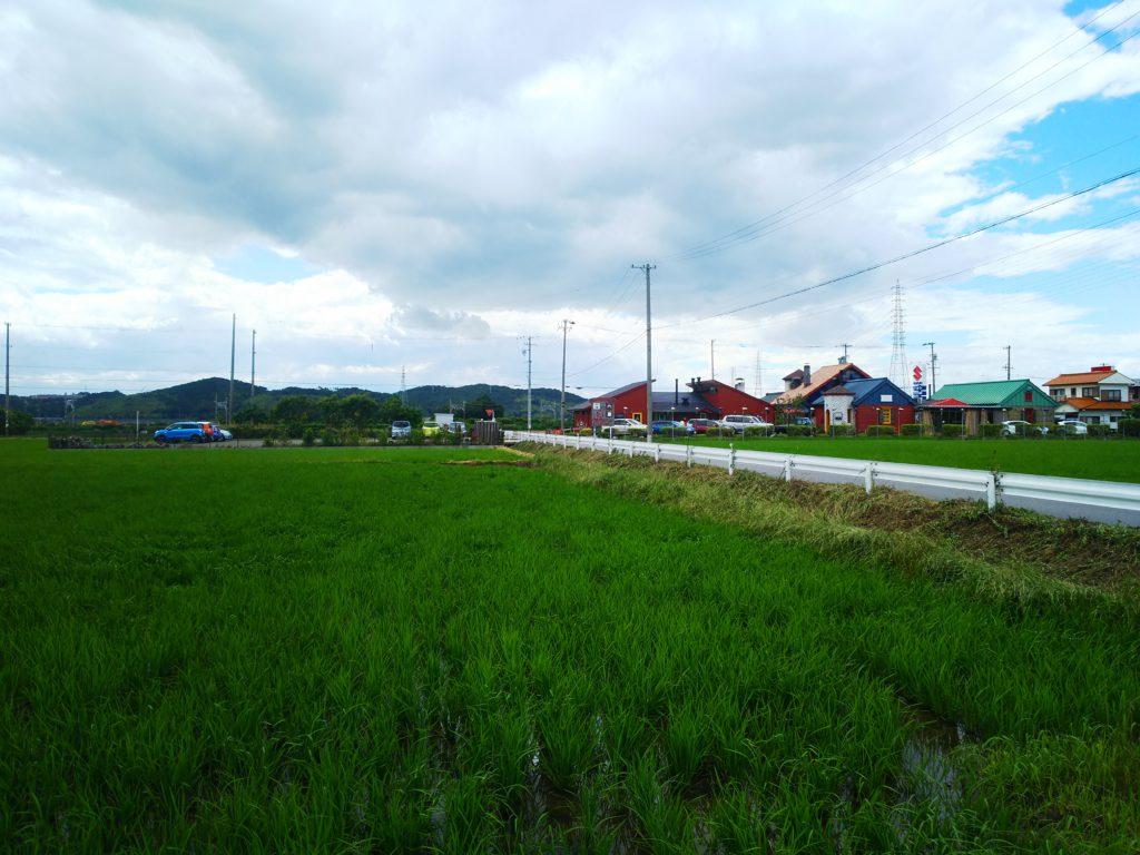 「緑と風のダーシェンカ」店周辺の田