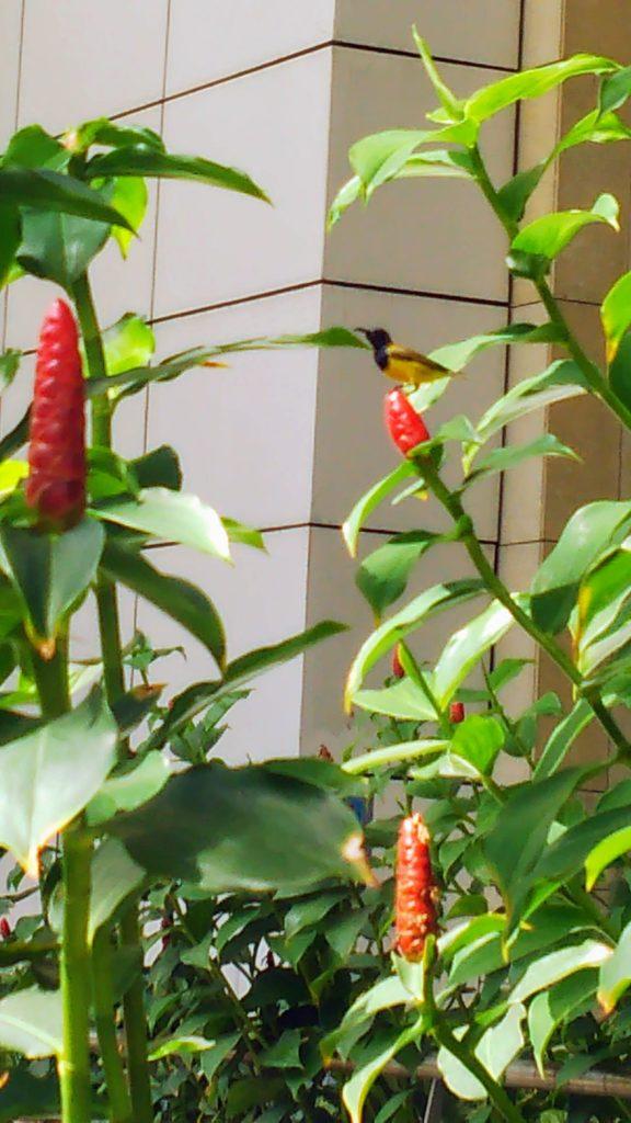 街に植えられている生姜と小鳥