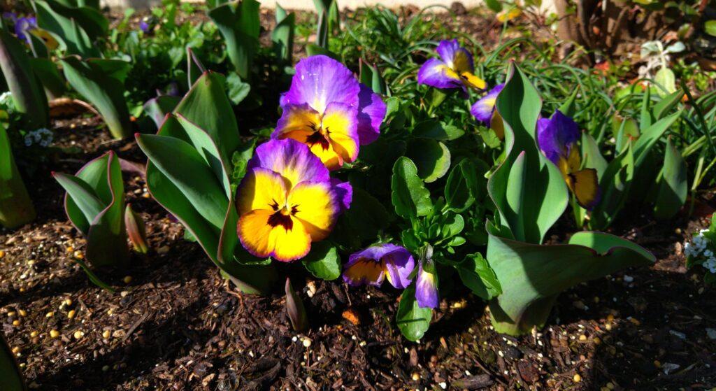 春ですね。春に読んであげたいおすすめ絵本は❓