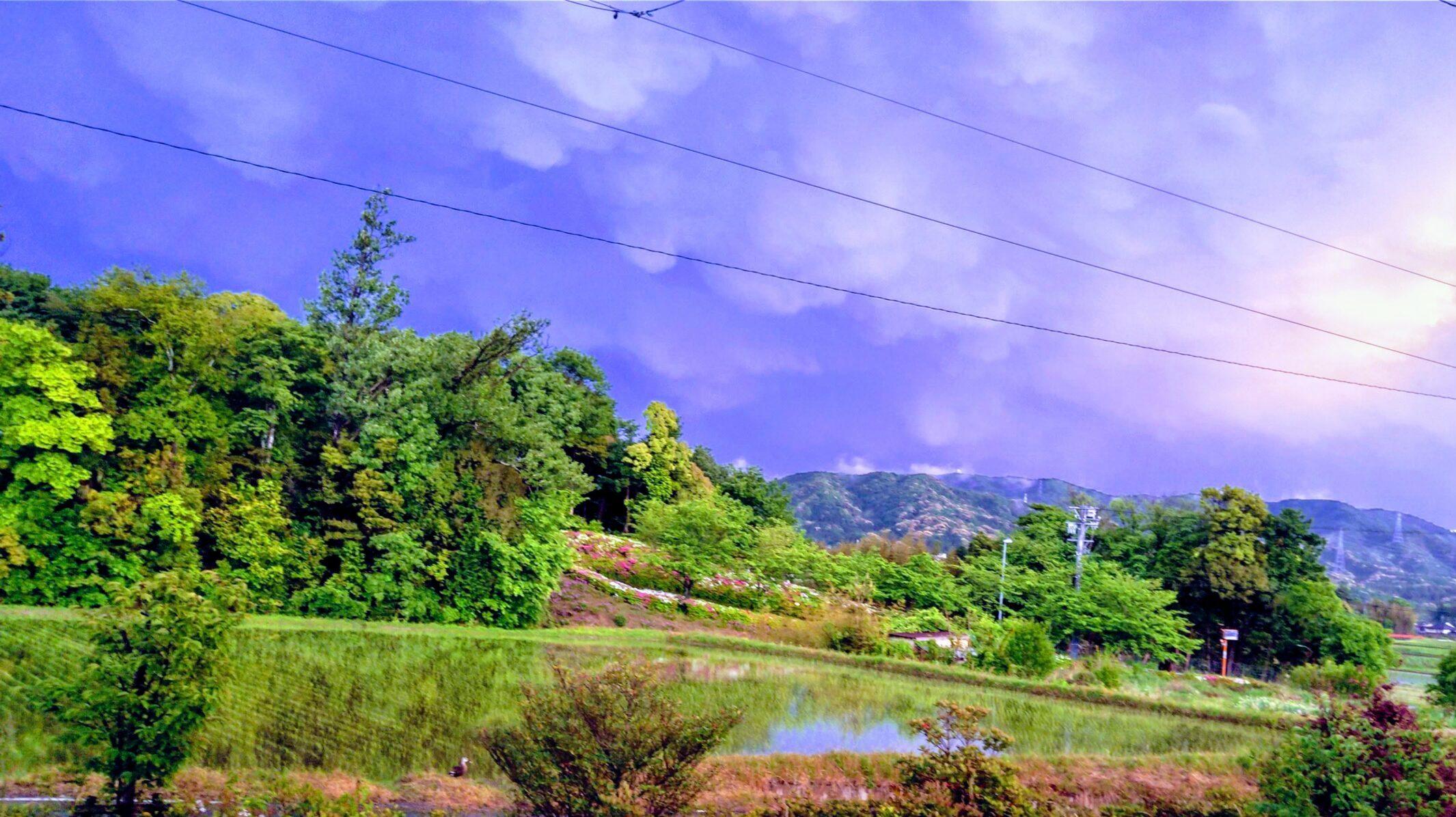 嵐の後の田んぼ