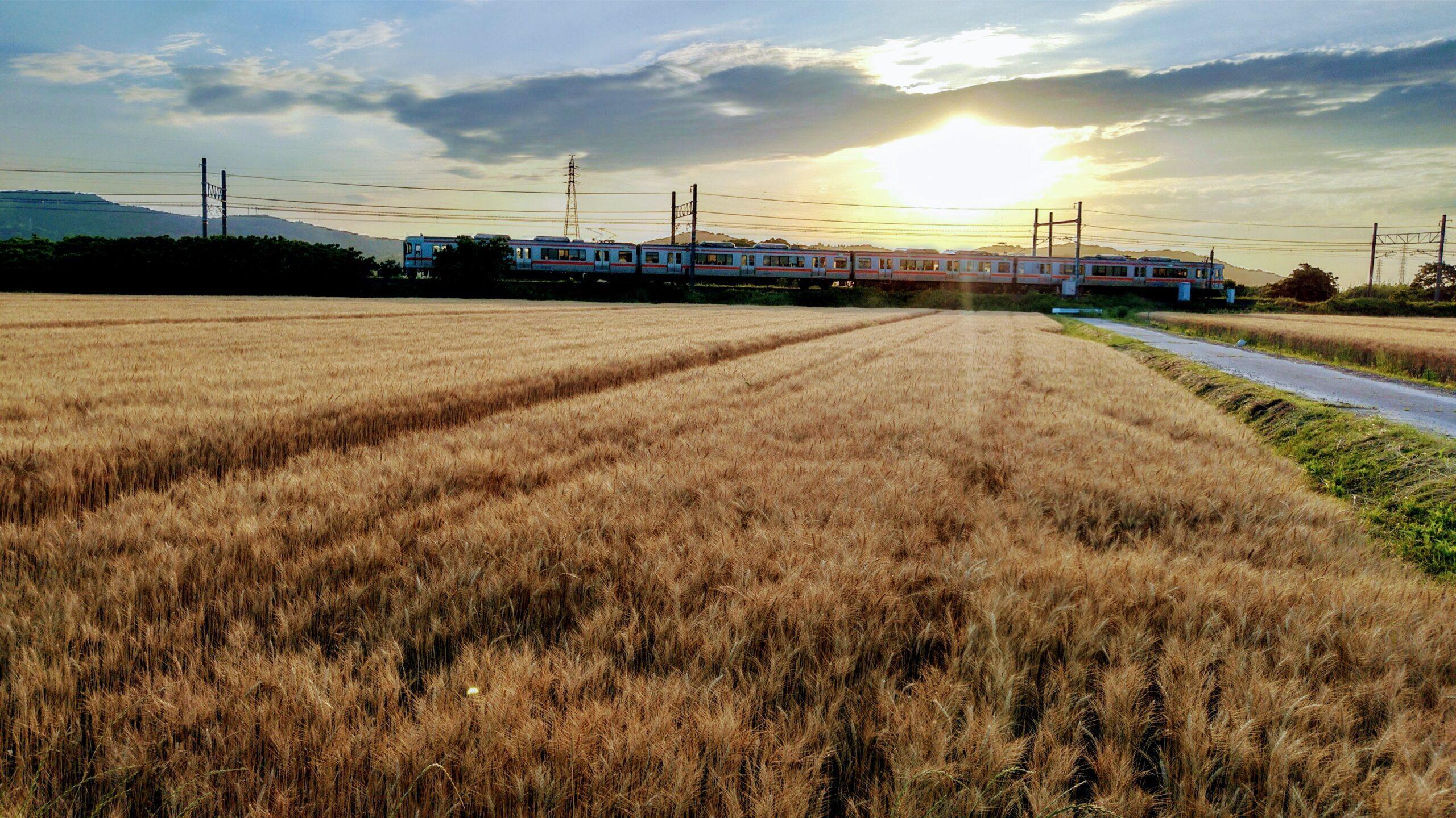 麦畑とJR