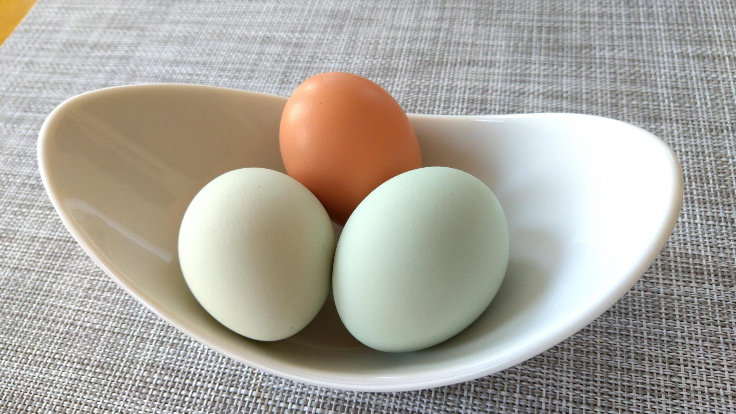 アロウカナの卵
